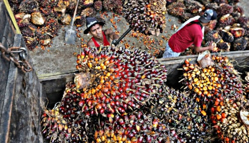 Apolin: Proyeksi 2020, Kinerja Ekspor Oleokimia Sawit Tumbuh Positif!