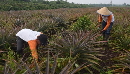 Foto Kucurkan Dana Rp3 M, Pertamina Selamatkan 3.600 Ha Lahan Gambut