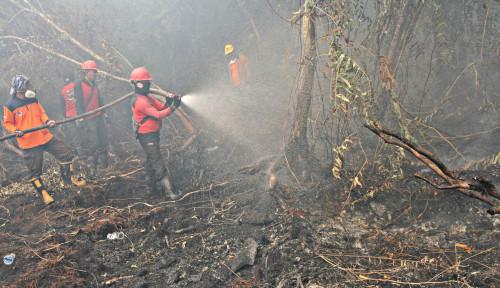 Foto Tenang, Indonesia Masih Sanggup Kok Tangani Kebakaran Hutan