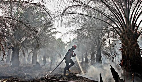 Foto Alhamdulillah! Wilayah Kalimantan Tengah Berpotensi Diguyur Hujan, Kata . . .  .
