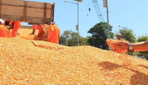 Bea Cukai Gorontalo Kawal Ekspor Jagung dan Molase ke Filipina