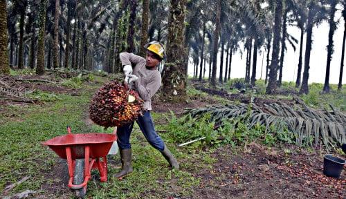 Sahat Sinaga demi Kelancaran Program BBN: 4 Syarat Peningkatan Produktivitas Kebun Sawit