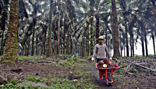 Dengan Insentif RSPO, Petani Sawit Swadaya Jambi Selamatkan Kualitas Air Sungai