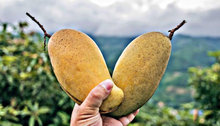 Mudah Dicari, Buah Tropis Ini Bisa Jaga Kadar Kolesterol hingga Melawan Kanker