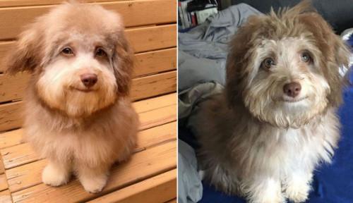 Foto Mata dan Senyum Mirip Manusia, Anjing Ini Jadi Sorotan Warganet