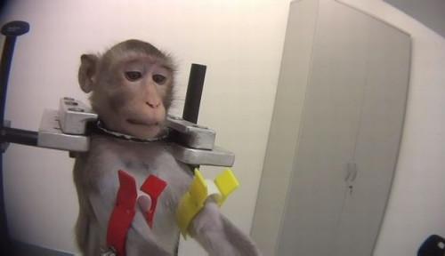 Foto Laboratorium di Jerman Siksa Binatang saat Jalani Tes, Petisi Online Kecaman Muncul