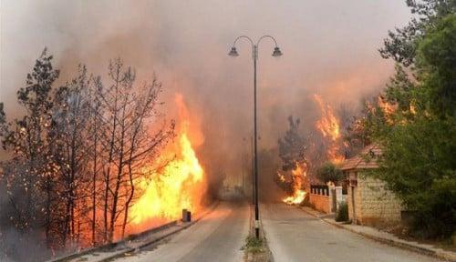 Foto Kebakaran Hebat Landa Lebanon, Masyarakat Bilang. . .