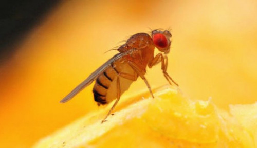 Foto Berkat Alat Pembasmi Lalat, Pria Ini Jadi Konglomerat