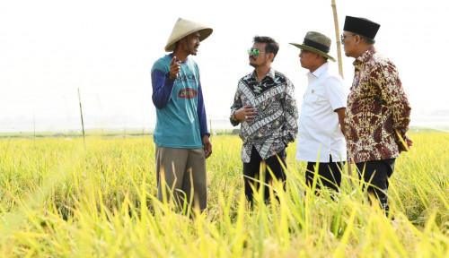 Foto Kementan Tegaskan Indonesia Lebih Untung Jadi Anggota WTO