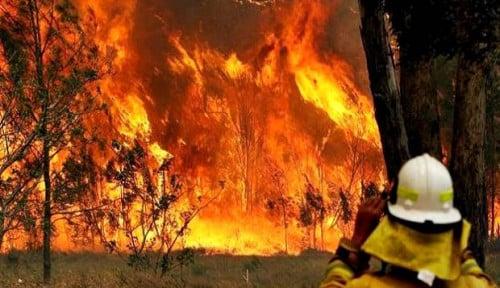 Foto Asap Sudah Capai Level Bahaya, Sydney Liburkan Ratusan Sekolah