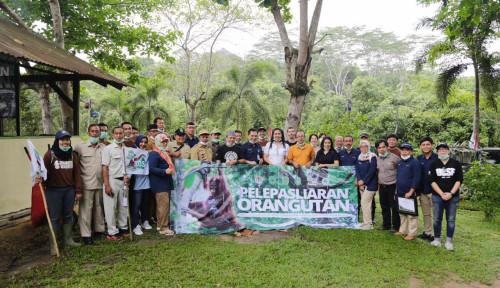 Foto Pupuk Indonesia Bantu Lestarikan Orangutan di Kaltim