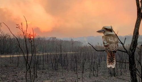 Foto Australia Izinkan Turis Ransel Menetap Jika Bantu Pemulihan Kebakaran Hutan