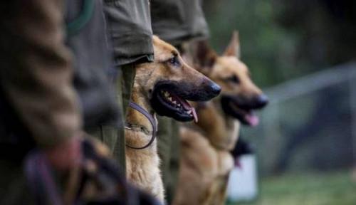 Anti-Mainstream, Finlandia Kini Latih Anjing buat Deteksi Covid-19, Kayak Apa?