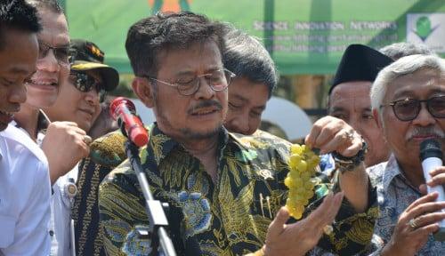 Foto SYL Sematkan Nama Cucu Jokowi ke Varietas Anggur Baru, Apa Alasannya?