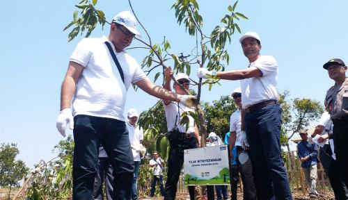 Sambut Hari Lingkungan Hidup 2019, HCML Tanam 15 Ribu Mangrove