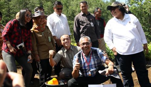 Foto Rehabilitasi Hutan dan Lahan Rp2,7 T untuk Serap Jutaan Tenaga Kerja
