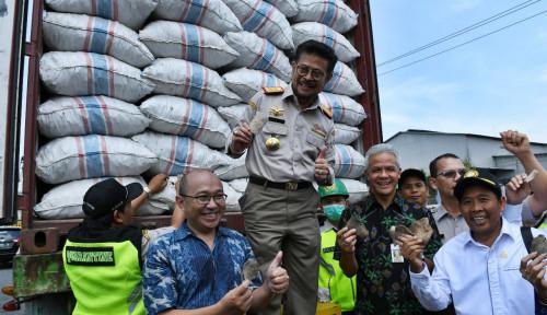 Foto Makin Bersinar! 60 Ton Porang Diekspor ke China