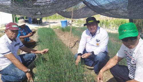 Foto Agar Tak Bergantung Impor, Kementan Konsisten Terapkan Wajib Tanam Bawang Putih