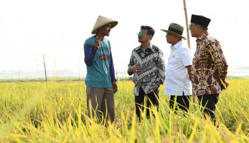 Foto Bangun Pertumbunan Petani Muda, Kementan: Jadi Profesi yang Menjanjikan!