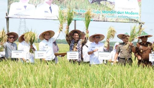 Foto Beras Surplus, Ngawi Jadi Penyangga Pangan Nasional