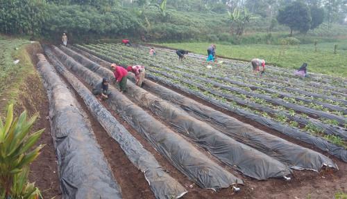 Foto Pengusaha Muda Pertanian Dongkrak Ekonomi Nasional