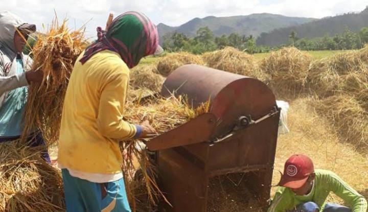 Tidak Hanya Sumatera, Petani di Jawa Juga Siap Panen Raya - Warta Ekonomi