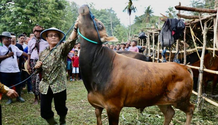 Kementan Apresiasi dan Dukung Pengembangan Peternakan Sapi Kabupaten Kupang - Warta Ekonomi