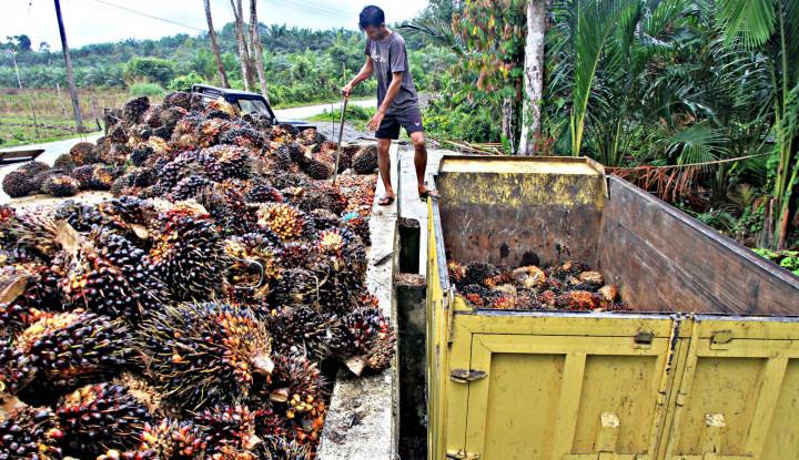 Dear 2020, Apakah Produksi Minyak Sawit Indonesia Akan Turun?