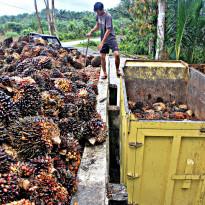 Juni 2020: Harga Referensi CPO Turun, Biji Kakao Naik!