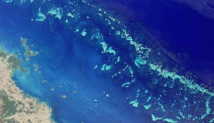 Memprihatinkan, Polusi Ancam Kehidupan Lumba-lumba di Great Barrier Reef Australia - Warta Ekonomi