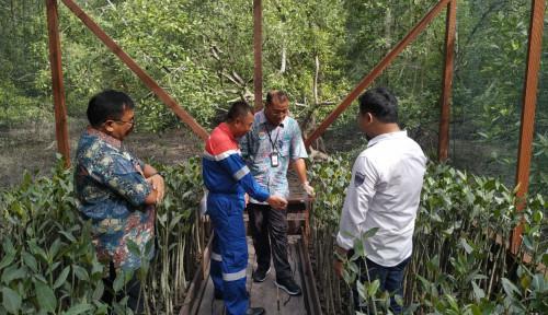 Foto Pertamina Resmikan Rumah Pembibitan Mangrove Margomulyo Balikpapan