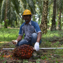 Gulat Manurung: Petani Sawit Mensyukuri Manfaat Dana Pungutan Ekspor