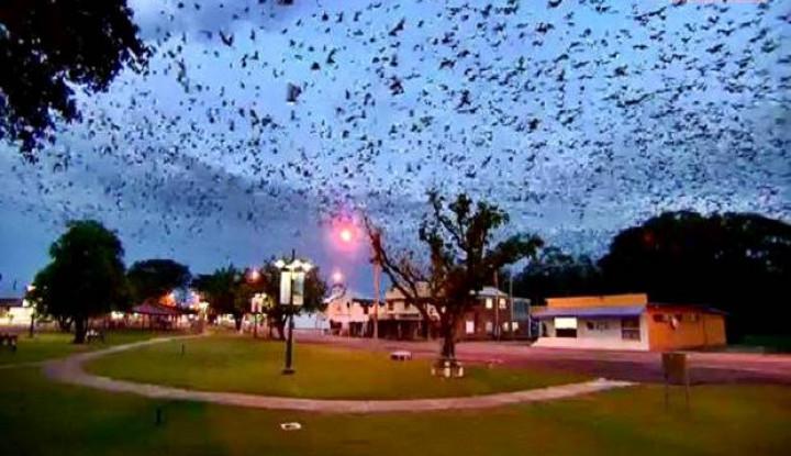 Penduduk Ketakutan, Ribuan Kelelawar Serbu Kota di Australia - Warta Ekonomi