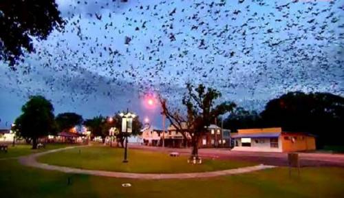 Foto Kenapa Kelelawar Tak Bisa Sakit Meski Tularkan Virus?