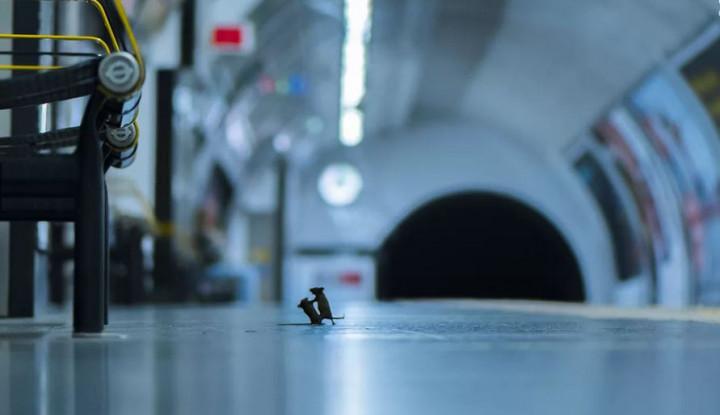 Foto Tikus Kecil Bertarung di Peron Stasiun, Fotografer Muda Ini Raih Penghargaan - Warta Ekonomi