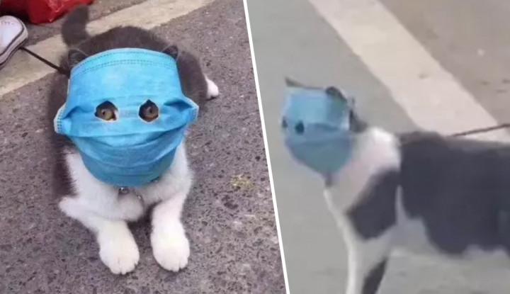 Unik Menggemaskan, China Kasih Masker untuk Hewan tapi Bergunakah? - Warta Ekonomi