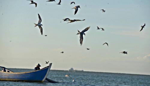 Blokade Laut Oleh Israel Percuma, Buktinya Nelayan Palestina Tangkap Tuna Raksasa