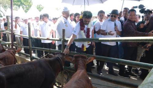 Foto Kunjungi Serdang Bedagai, Mentan SYL Panen 1.000 Ekor Pedet