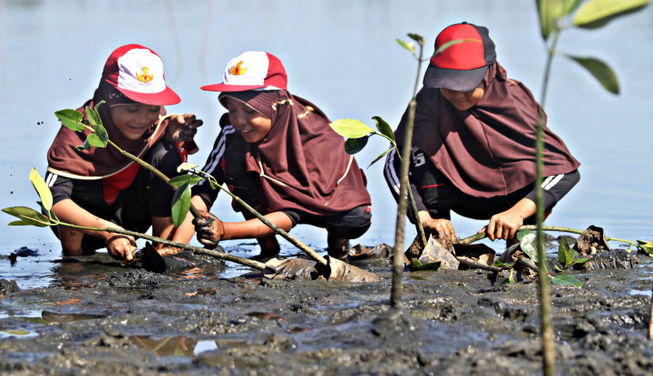 Save Our Sea: Melestarikan Mangrove, Mencegah Abrasi Pantai