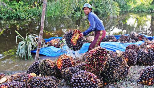Transformasi Digital, Sinar Mas Agribusiness & Food Mampu Jaga Tingkat Produksi CPO