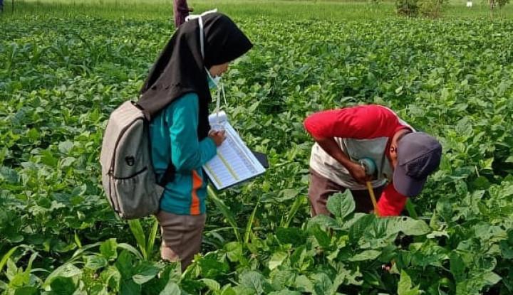 Unibraw & Unila Dukung Kementan Kembangkan Diversifikasi Pangan