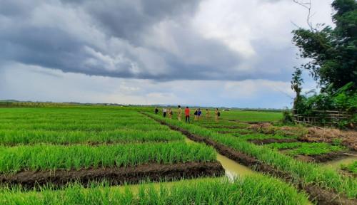 Milenial Terjun ke Bisnis Pertanian, Negara Selamat dari Krisis