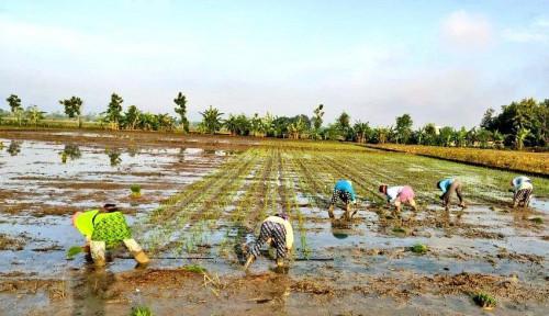 RUU Cipta Kerja Buka Peluang Investasi Sektor Pertanian