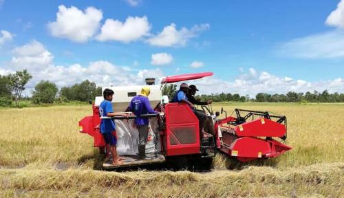 PDB Pertanian Naik, Orang UI Minta Pemerintah Fokus ke Pertanian