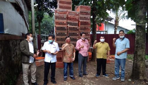 Pemerintah Beli Kelebihan Ayam Hidup di 6 Provinsi, Peternak Mandiri: Kami Apresiasi dan Terbantu