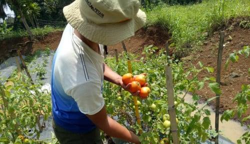 Akademisi IPB: Sektor Pertanian Jadi Penyelamat Perekonomian Nasional