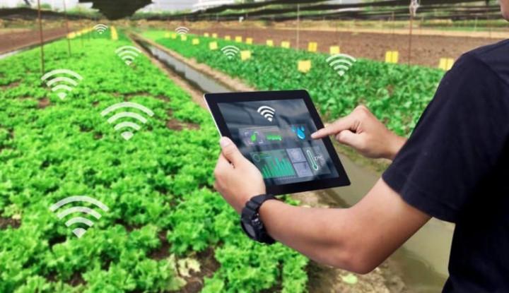 Foto Berita Program Food Estate Potensi Lahirkan New Entrepreneur