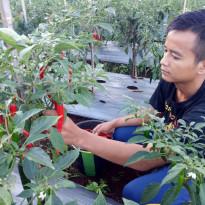 Project Manager YESS Bicarakan Entrepreneur Pertanian di Webinar