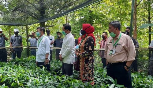 Kunjungi Kebun Bibit Pala, Mentan SYL: Kita Kuasai Pasar Dunia dengan Teknologi Pertanian