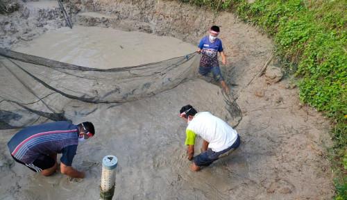 Tetap Produktif, Mitra Binaan Pertagas di Prabumulih Panen Ikan Patin